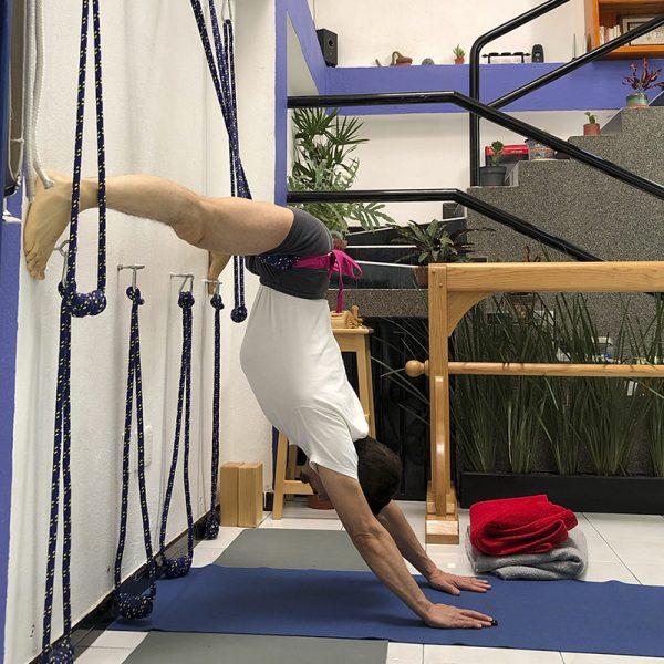 Prasarita Padotanasana en cuerdas Yoga Iyengar